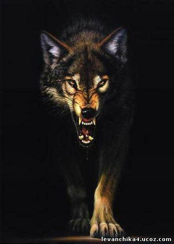 The Wolf Does Not Lose Sleep Over Opinion of Sheep